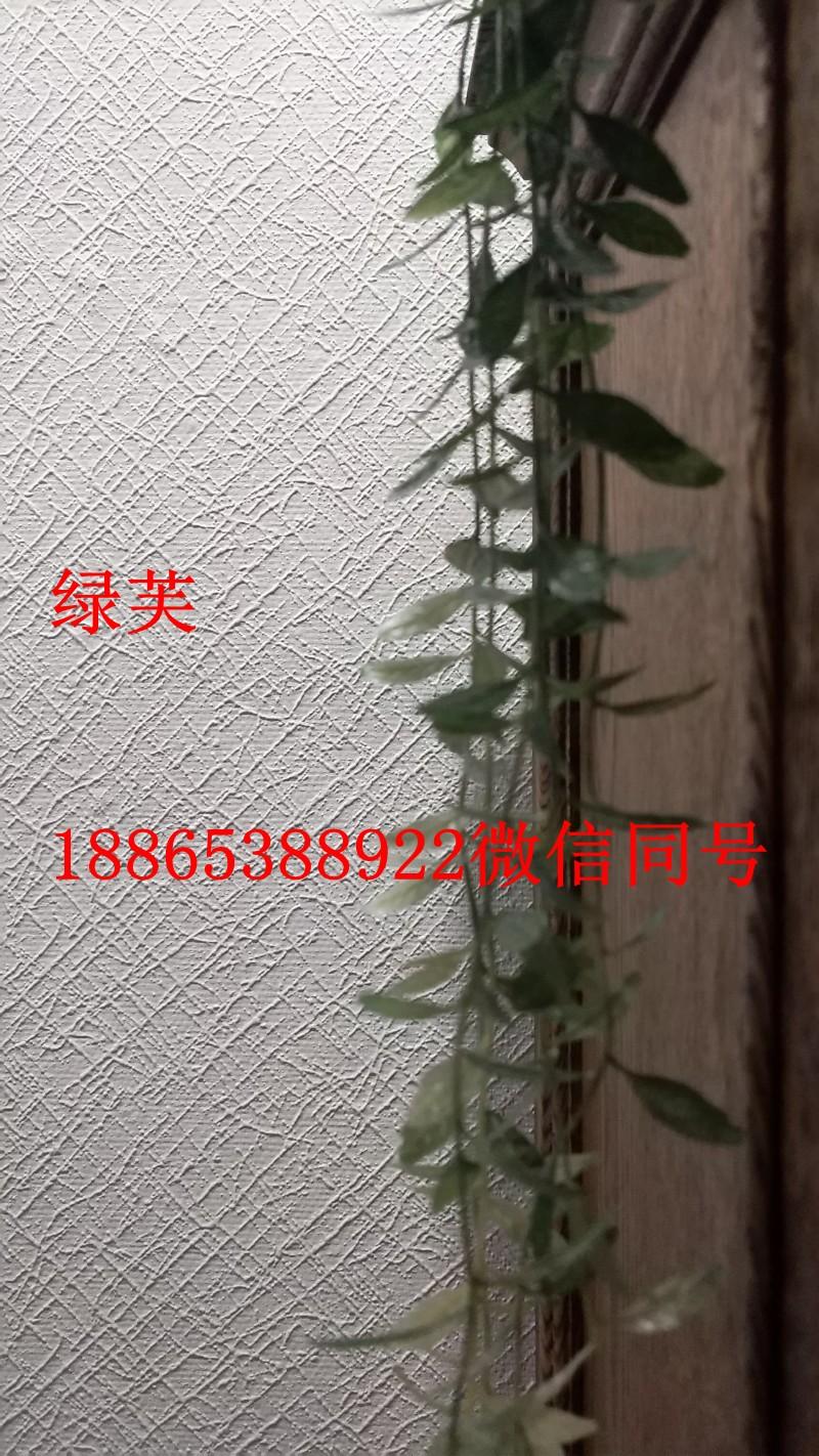 绿芙莱海基布优点%刷漆墙布石头布招商